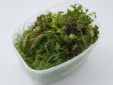 Микс из микрозелени (80 гр. в упаковке)