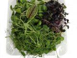 Микс из микрозелени (140 гр. в упаковке)