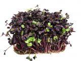 Кресс-сакура (микрозелень, в субстрате)